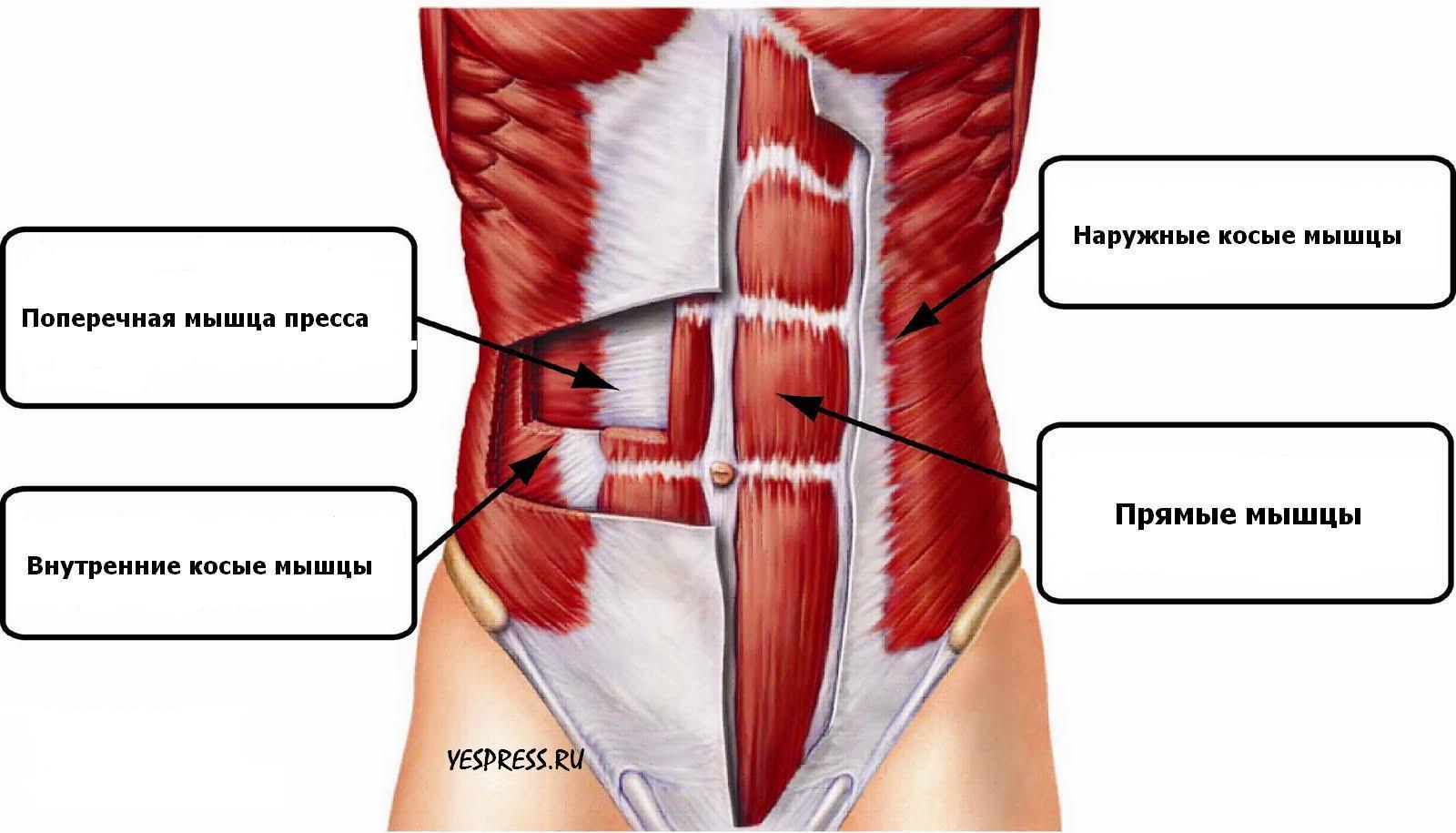 Абдоминальные мышцы  Домашний спорт