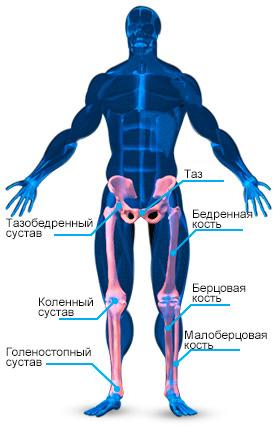 kosti-nog