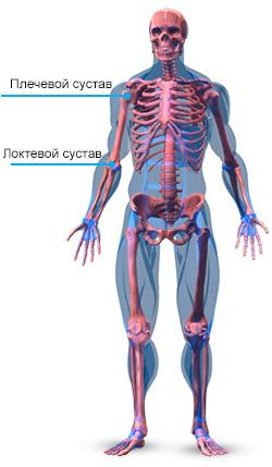 skelet-ruk