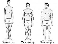 Какой ваш тип телосложения – эктоморф, мезоморф или эндоморф?