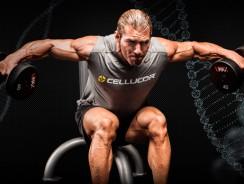Анатомия плеч — Научный подход к тренировке плеч
