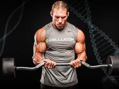 Анатомия мышц рук — Научный подход к тренировке рук